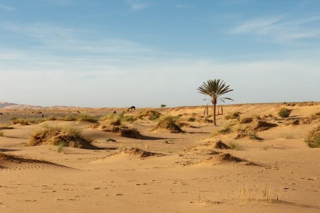 Paesaggio nel deserto del sahara