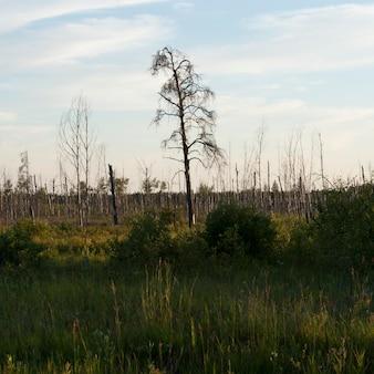 Paesaggio nel lago dei boschi, nella zona dell'ontario