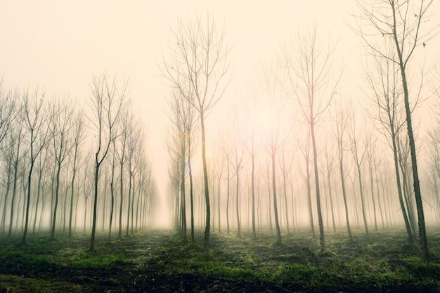 Paesaggio nella mattina d'inverno