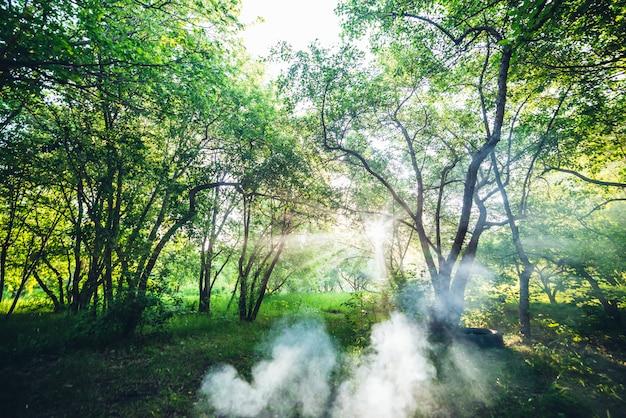 Paesaggio panoramico con raggi di sole attraverso i rami degli alberi nel parco estivo