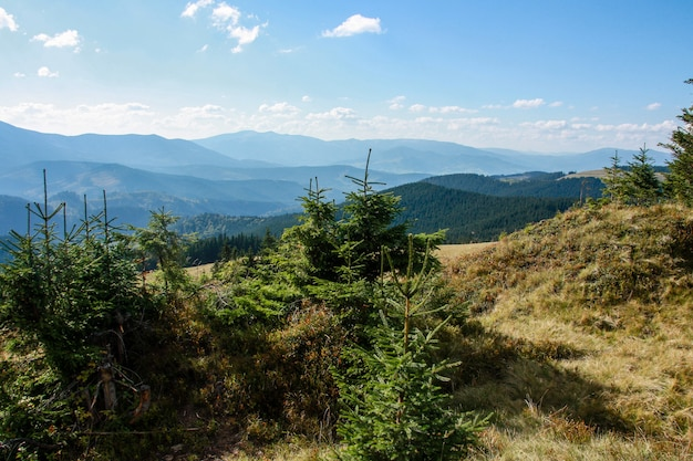 Paesaggio pittoresco della foresta verde e delle montagne.