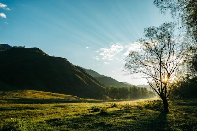 Paesaggio pittoresco mattina in montagna. attraverso i rami degli alberi si fanno strada i raggi del sole.