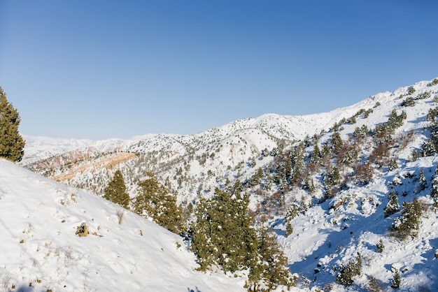 Paesaggio presso la stazione sciistica di beldersay nelle montagne tien shan in uzbekistan in inverno.