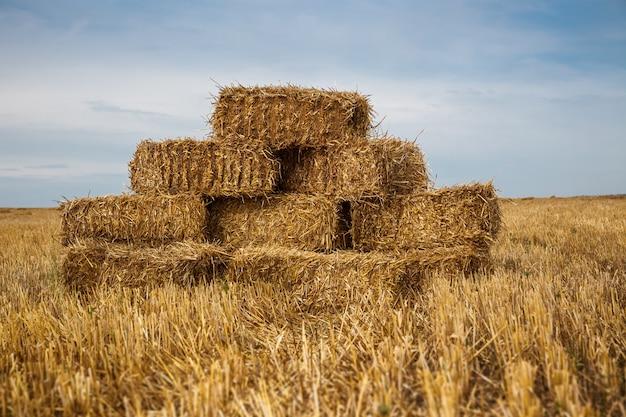 Paesaggio rurale che mostra il mucchio di fieno del grano nel campo