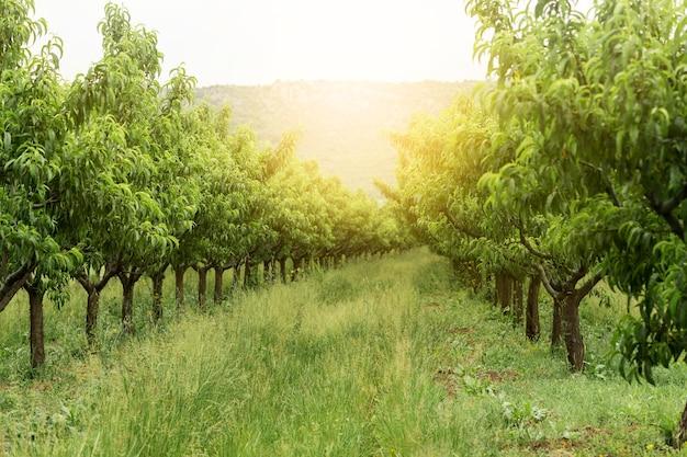 Paesaggio rurale con alberi