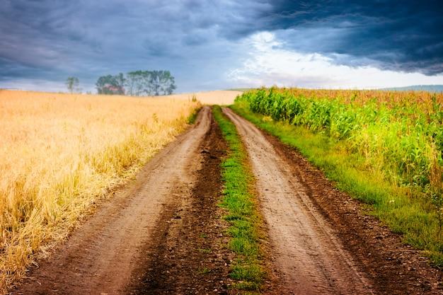 Paesaggio rurale con strada tra due campi.