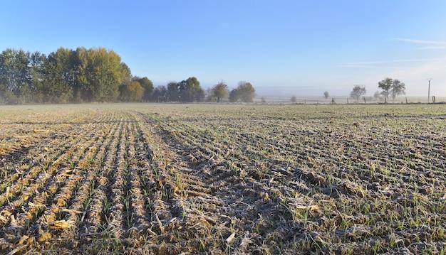 Paesaggio rurale ghiacciato