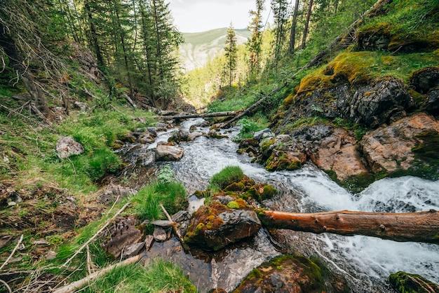 Paesaggio scenico alla flora selvaggia bella sul piccolo fiume nei boschi sul fianco della montagna. tronchi e massi di albero caduti muschiosi con i muschi in acqua sorgiva libera. paesaggio della foresta alle cascate nell'insenatura della montagna.