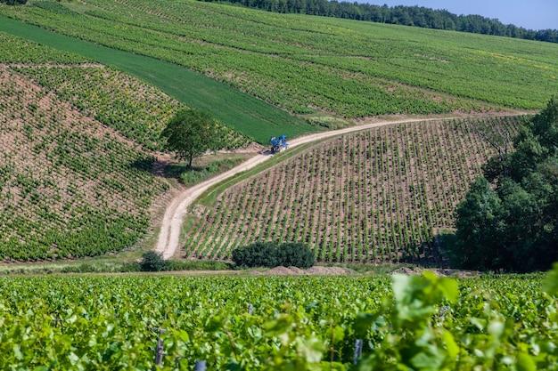 Paesaggio scenico della vigna con le colline e la piantagione dell'uva