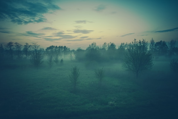 Paesaggio sereno nebbioso