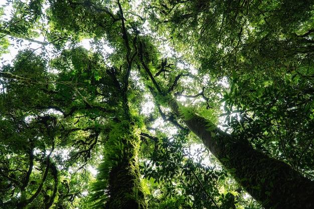 Paesaggio verde della foresta. fogliame verde di mattina
