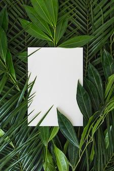 Pagina bianca vuota con foglie verdi