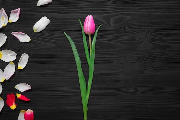 Pagina dai petali del tulipano isolati su fondo di legno