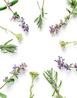 Pagina dalle erbe medicinali su una priorità bassa bianca, vista superiore, disposizione piana, spazio della copia.