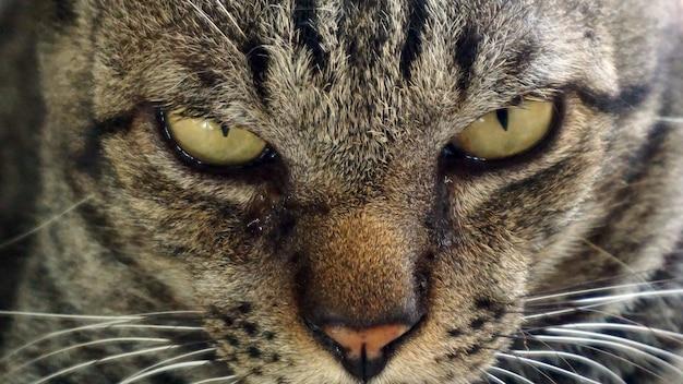 Pagina del profilo del gatto, concentrarsi sugli occhi e sul viso