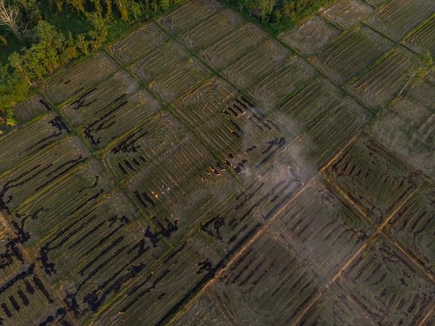 Paglia di riso bruciante nel campo di agricoltura