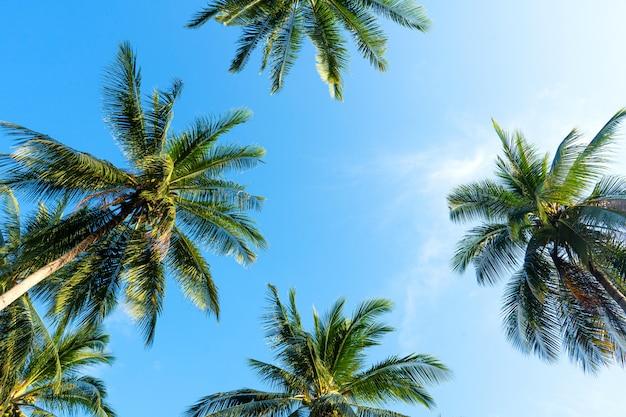 Palm grove. palme nella giungla tropicale. simbolo dei tropici e calore