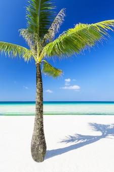Palm sulla spiaggia