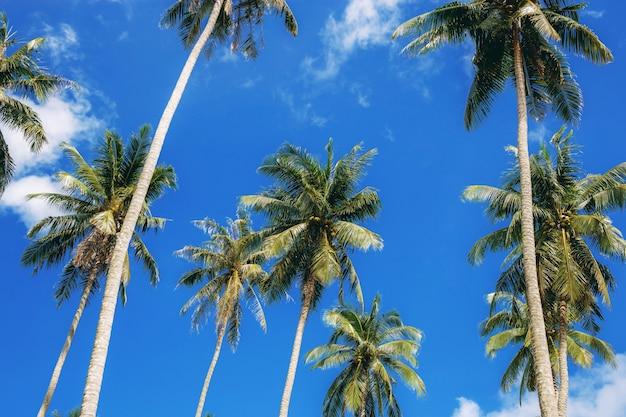 Palma con bella di cielo blu.