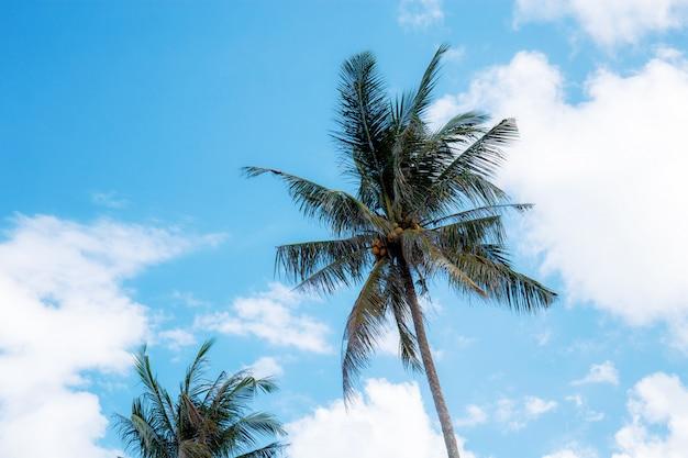 Palma con cielo blu.