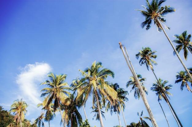 Palma con colorito della natura.