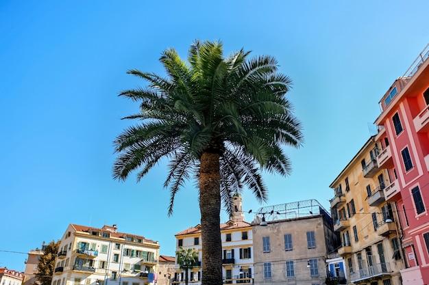 Palma con edifici a sanremo, italia