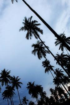 Palma con silhouettethe al cielo.