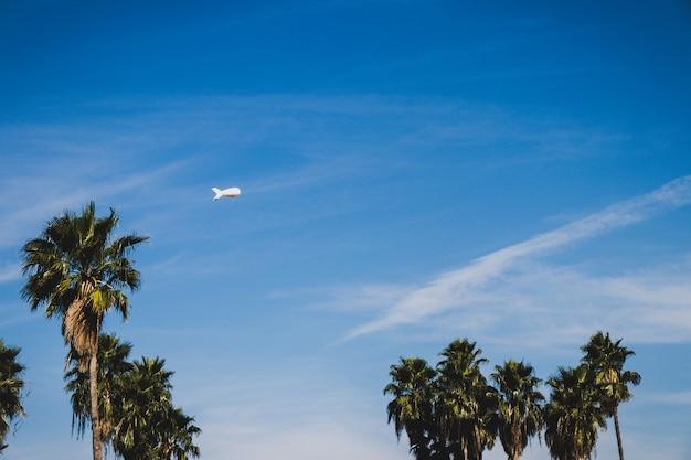 Palma con un dirigibile sullo sfondo