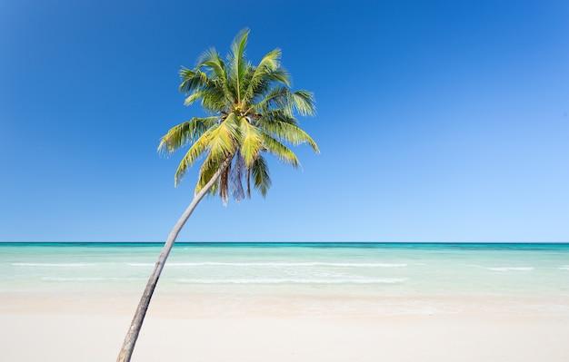Palma da cocco con spiaggia di sabbia bianca e sfondo blu cielo