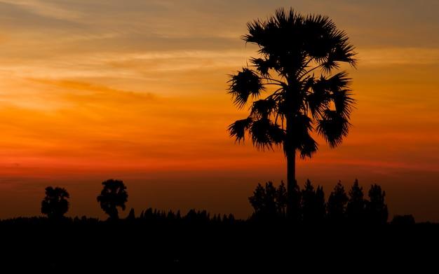 Palma da zucchero della siluetta su alba