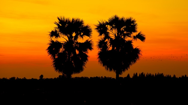 Palma da zucchero della siluetta sul cielo di tramonto