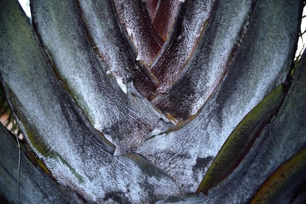 Palma della corteccia su struttura e fondo