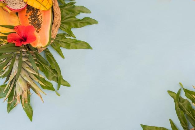 Palma di foglie verdi tropicali. sfondo estivo