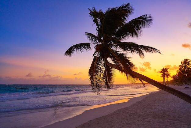 Palma di tramonto della spiaggia di tulum riviera maya
