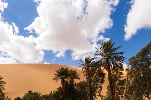 Palma nel deserto