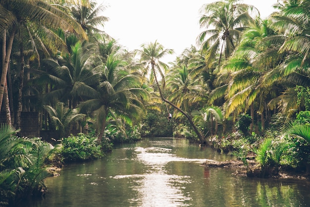Palma pendente al fiume maasin, siargao