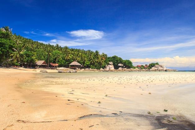Palma sopra la laguna con le barche al giorno del sole. isola di koh tao, tailandia