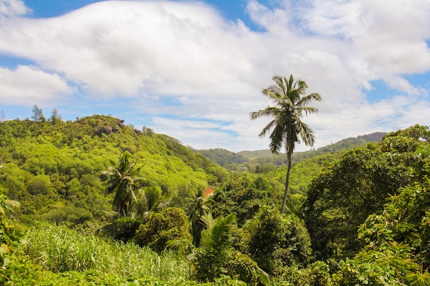 Palma sull'isola tropicale alle seyshelles
