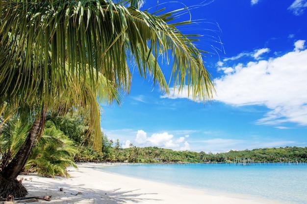Palma sulla spiaggia a cielo blu.
