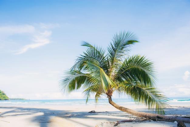 Palma sulla spiaggia di sabbia.