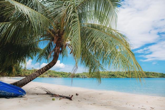 Palma sulla spiaggia.