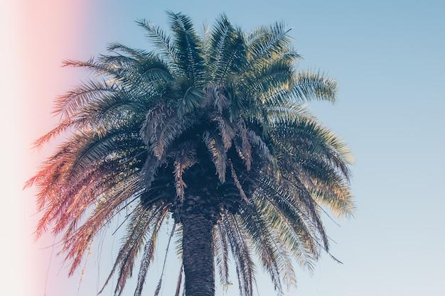 Palma tropicale. vacanza o concetto di vacanza