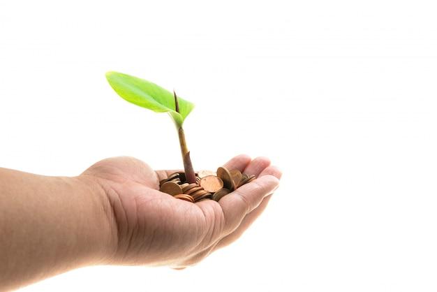 Palme con un albero che cresce dal mucchio di monete
