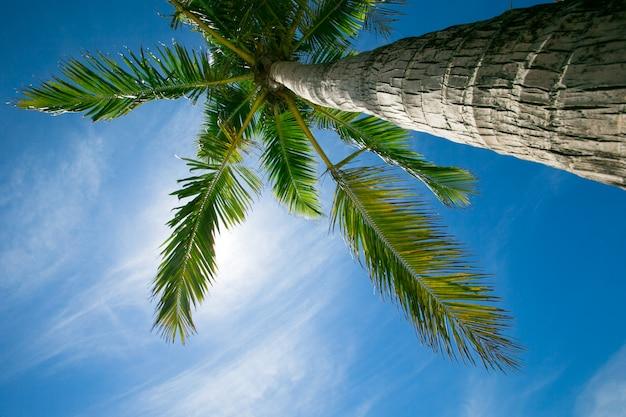 Palme contro cielo blu, palme alla costa tropicale