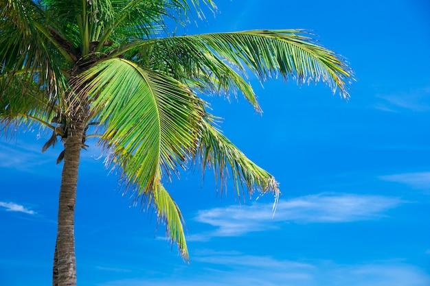 Palme contro il cielo blu