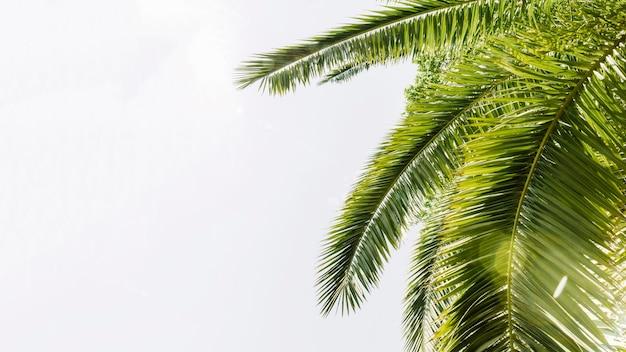 Palme curve verdi contro il cielo