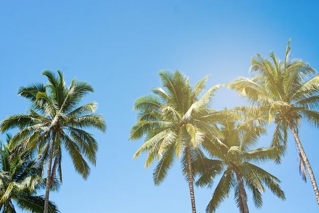 Palme da cocco, bellissimo tropicale