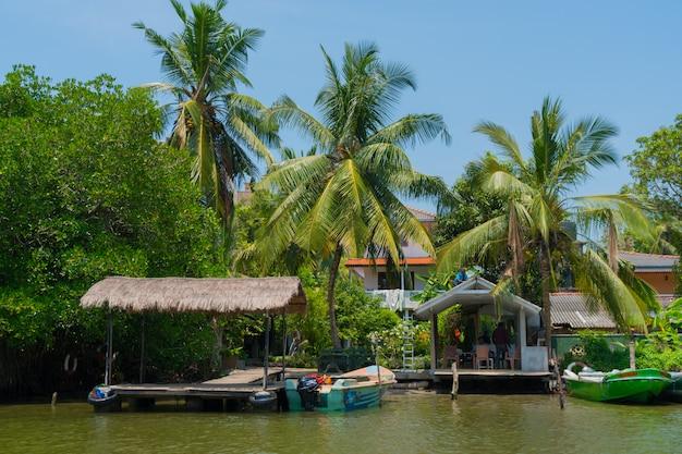 Palme da cocco sulla riva del fiume.