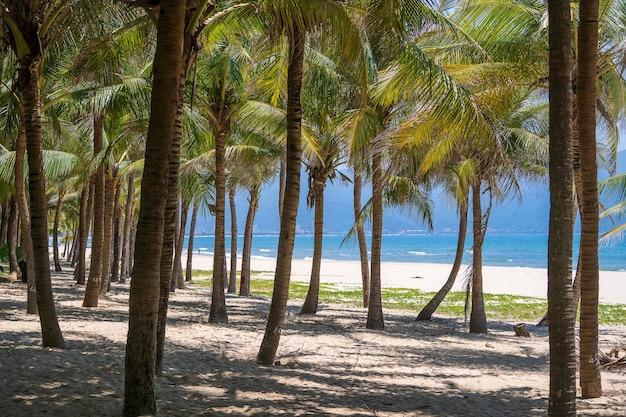 Palme da cocco verdi sulla spiaggia di sabbia bianca