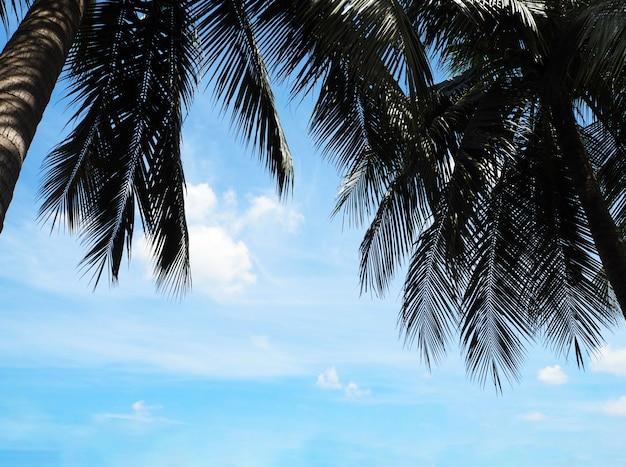 Palme da cocco